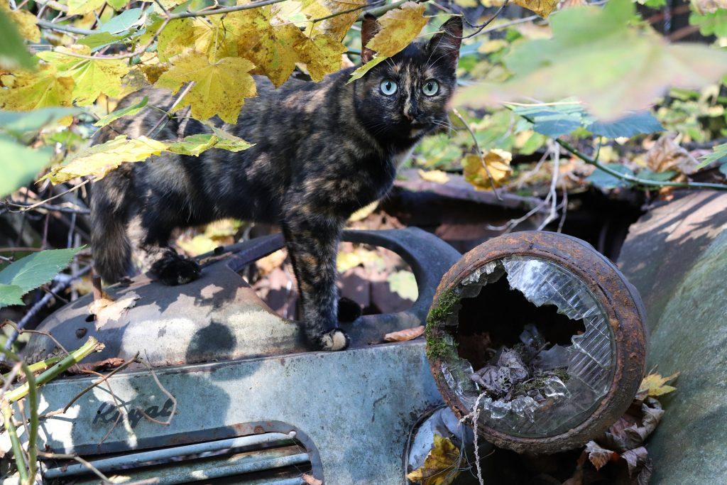 La imagen tiene un atributo ALT vacío; su nombre de archivo es gatos-abandonados-1024x683.jpg