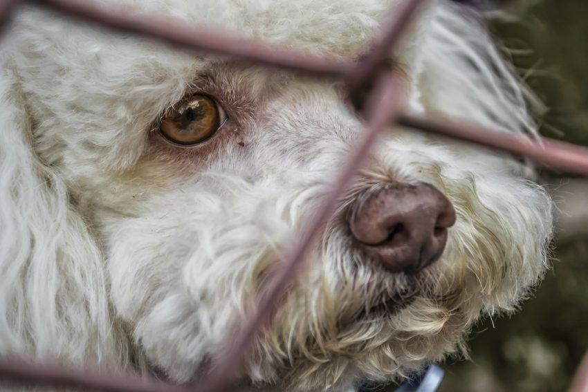 ABANDONADOS 2020; 183.000 perros y 123.0000 gatos