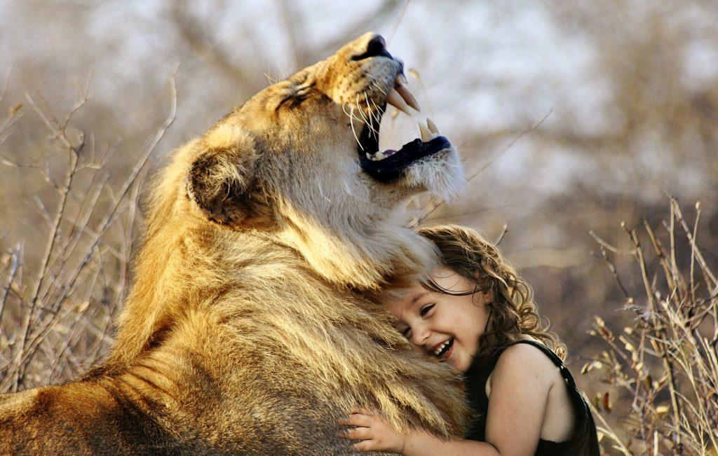 Un leon de mascota
